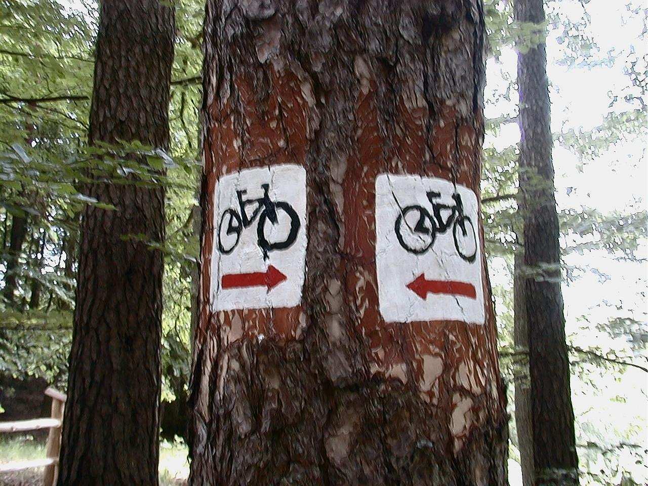 Ścieżka rowerow